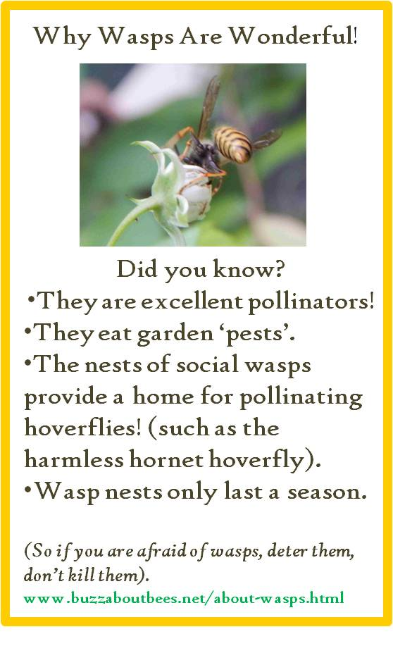Wasp Nests - What A Nest Looks Like And What To Do About Them
