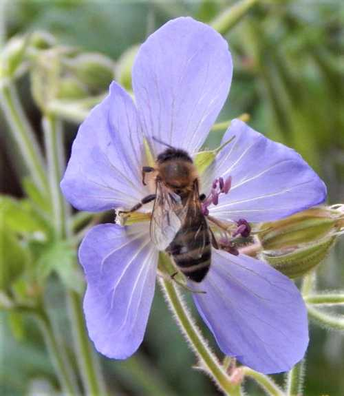 Honey bees especially really are a 'Canary in the coalmine'.  Even their hive products can tell us much about the levels of environmental pollutants over time.