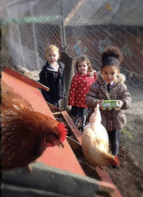 The children help with the chickens.