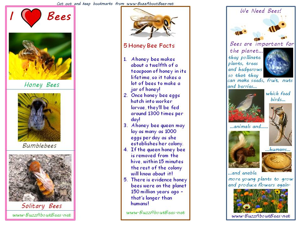 Horse 7 Worksheet in addition Human Anatomy Muscle Coloring Pages also File Daspletosaurus torosus steveoc moreover Bee Themed Bookmarks furthermore 1714. on in diagram coloring page