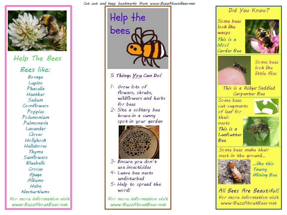 Bee Themed Educational Resources And Downloads