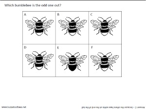 general bee themed activity sheets and puzzles