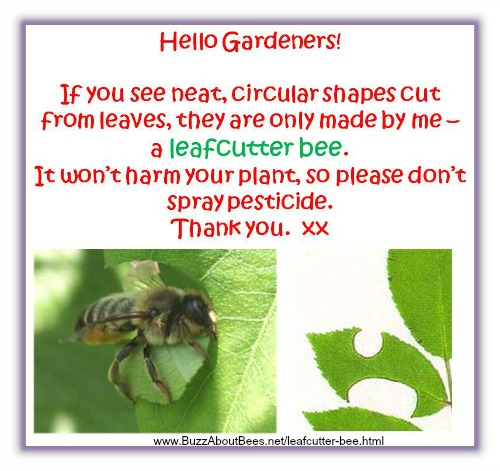 Leafcutter Bees In Gardens