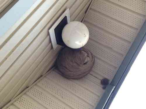 A fully formed wasp nest on a deck overhang.