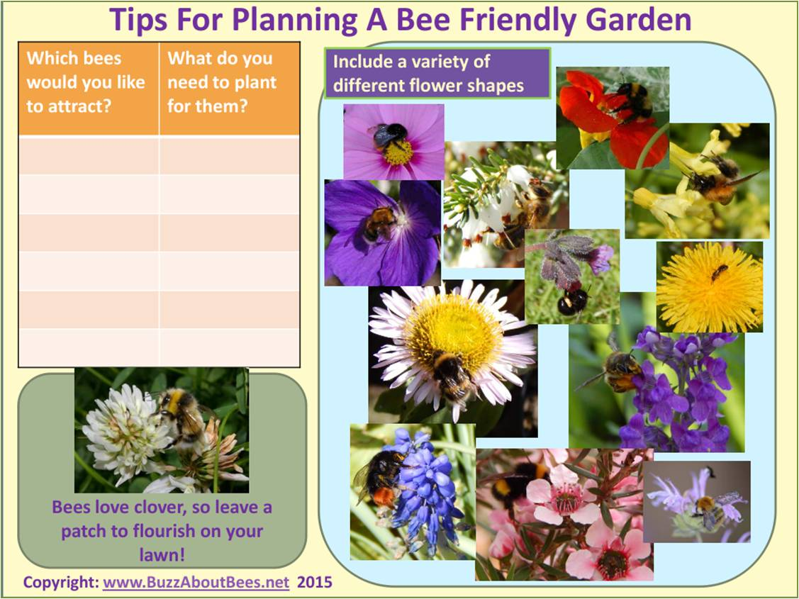 Planting a bee friendly garden planning and planting a bee friendly garden mightylinksfo