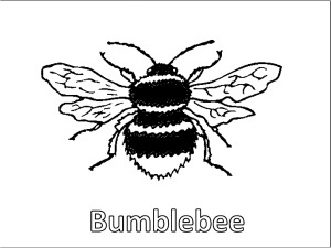 large bumblebee coloring page features the word bumblebee