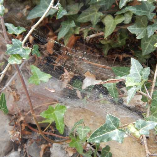 This spider web is very close to the entrance of a bumble bee nest.