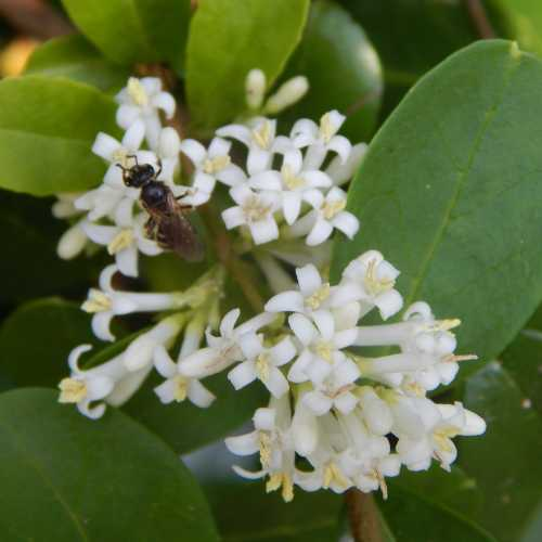 15 Flowering Shrubs For Bees