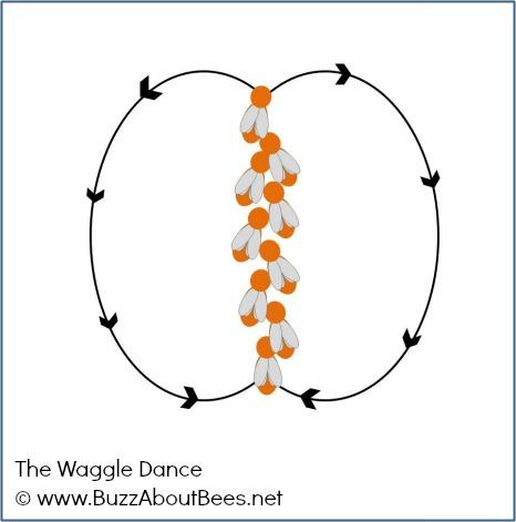 Bee Diagram Of Dance Diy Enthusiasts Wiring Diagrams