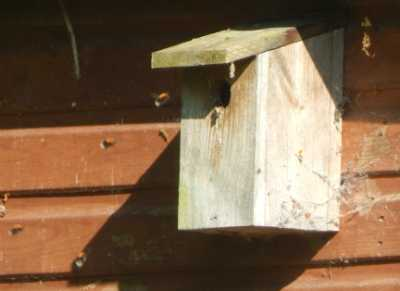 Bumble bee nest in a bird house.