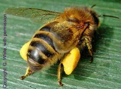 What Do Bees Eat