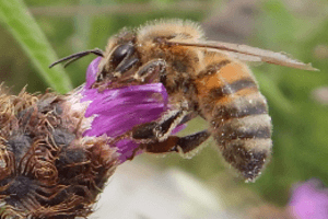 The compound eyes on bees are clearly visible at the sides of the head.