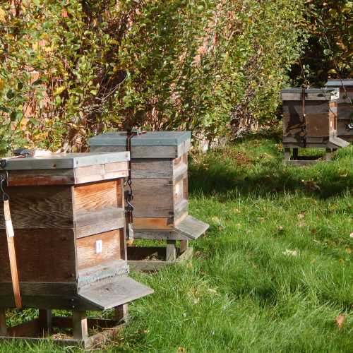 Honey Bee Hive - What Are Your Options?