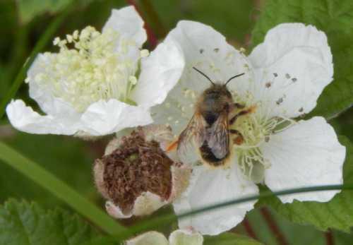 El plan de Estados Unidos para ayudar a las abejas se centra en más buscadores de tierras