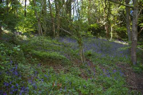 To an extent, wooded areas can provide their own set of opportunities for some bee species.