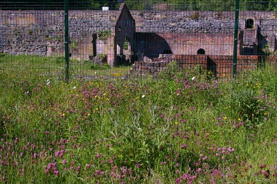 Scrubby wildflower areas around a historic brownfield site in wooded valley support many invertebrate species.